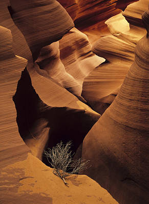 Natural Forces Photograph - Eroded Sandstone And A Tumbleweed by Ralph Lee Hopkins