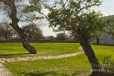 Photograph - Espiritu Santo Trees by Kim Henderson