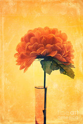Flower Wall Art - Photograph - Estillo - 01i2t03 by Variance Collections
