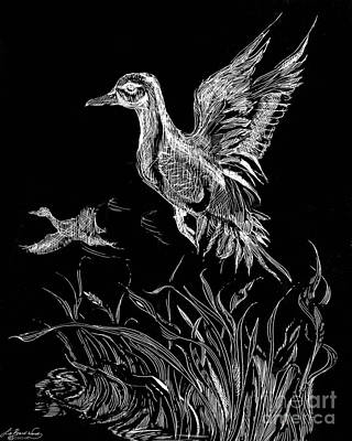 Drawing - Etched Duck by Lizi Beard-Ward
