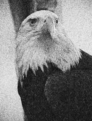 Mixed Media - Etched Eagle by Georgiana Romanovna