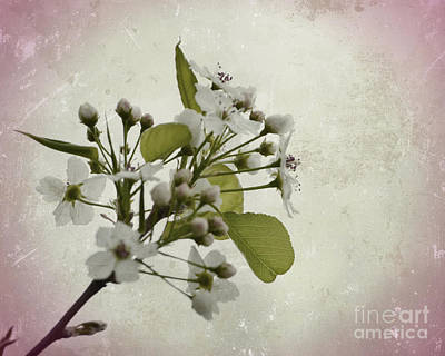 Photograph - Etched In Love by Traci Cottingham