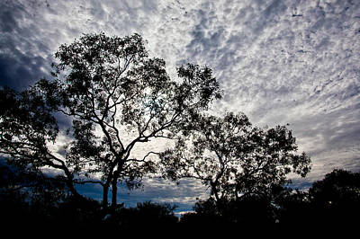 Photograph - Eucalypt In The Afternoon. by Carole Hinding