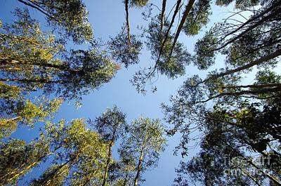 Breathe Photograph - Eucalyptus by Carlos Caetano