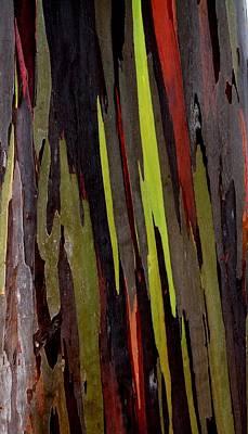 Photograph - Eucalyptus Deglupta by Elizabeth  Doran