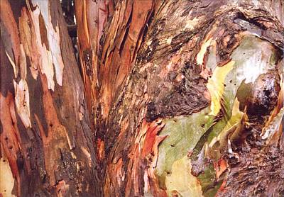 Art Print featuring the photograph Eucalyptus Tree by Cynthia Marcopulos