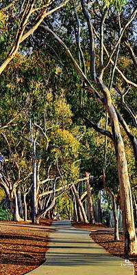 La Jolla Photograph - Eucalyptus Walk by Russ Harris