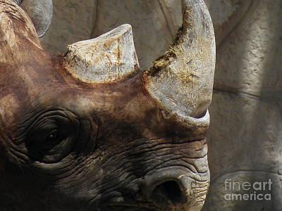Rhinoceros Photograph - Eunuch by Joe Jake Pratt