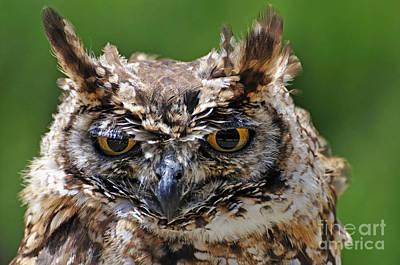 Eurasian Eagle-owl Art Print by Sami Sarkis