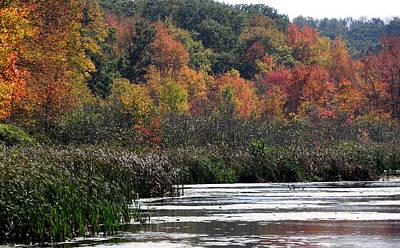 Even Swamps Have Beauty Art Print by Kim Galluzzo Wozniak