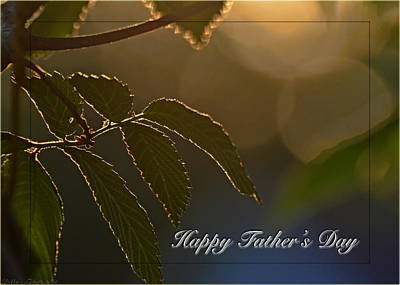 Photograph - evenening-light-on-elm-leaves Fathers Day by Debbie Portwood