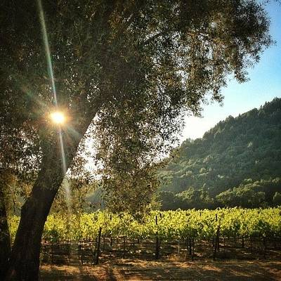 Vineyard Photograph - Evening #bicycle Ride Through The by Peter Stetson