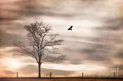 Evening Flight Print by Darren Fisher