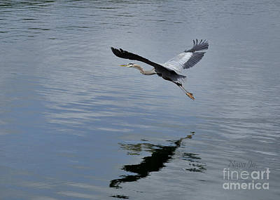 Art Print featuring the photograph Evening Flight Reflection by Nava Thompson