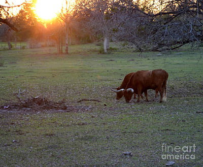 Photograph - Evening Meal by Donna Brown