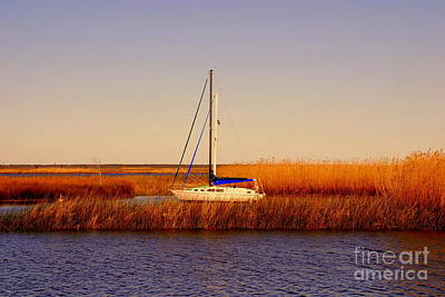 Realistic Photograph - Evening Peace by Susanne Van Hulst