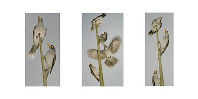 Photograph - Evening Song Birds Trio by Kelly Nicodemus-Miller