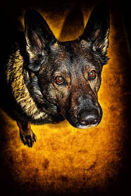 Photograph - Ever Loyal by Karol Livote