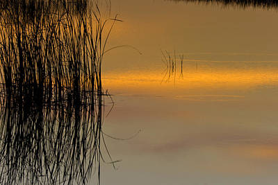 Photograph - Everglades Grasses by Ed Gleichman