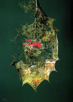 Photograph - Evergreen Card by John Neville Cohen