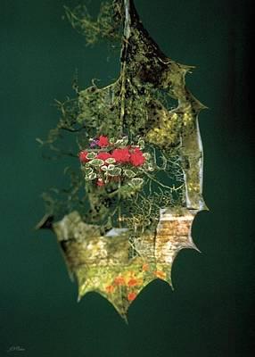 Photograph - Evergreen by John Neville Cohen