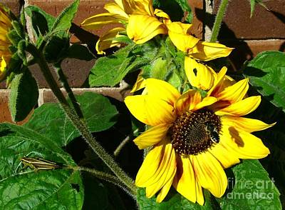 Art Print featuring the photograph Everyone Loves Sunflowers by Jim Sauchyn