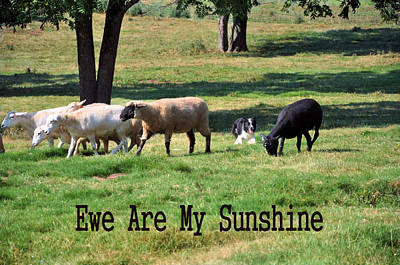 Photograph - Ewe Are My Sunshine by Jan Amiss Photography