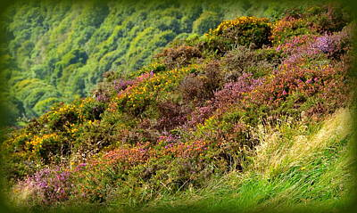 Photograph - Exmoor Heather In Bloom by Carla Parris