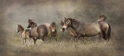 Photograph - Exmoor Ponies by Ethiriel  Photography