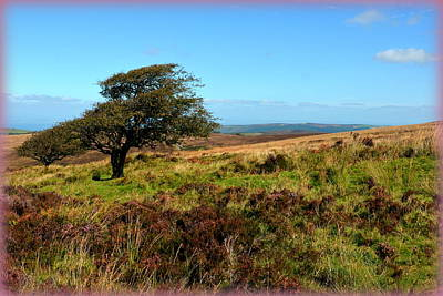 Photograph - Exmoor's Heather-covered Hills by Carla Parris