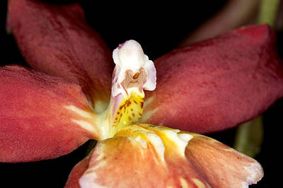 Art Print featuring the photograph Exotic Orchid Bloom by C Ribet