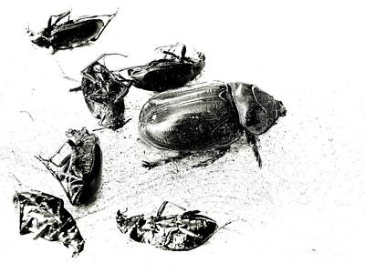 Vanquished Photograph - The Exterminator by Joe Jake Pratt