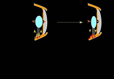 Eye Lens And Accommodation, Artwork Art Print by Francis Leroy, Biocosmos