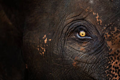 Part Of Photograph - Eye Of Thai Elephant by presented by Zolashine