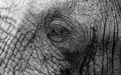 Eye Of The Elephant Original
