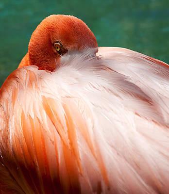 Eye Of The Flamingo Art Print by Steven Heap