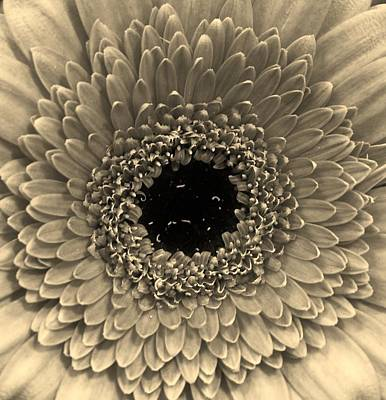 Photograph - Eye Of The Flower by Bruce Bley