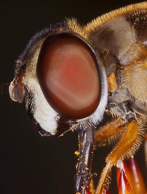 Eye Of The Fly Art Print by Charles Dana