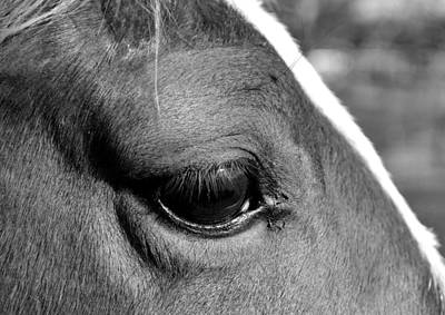 Eye Of The Horse Black And White Art Print by Sandi OReilly