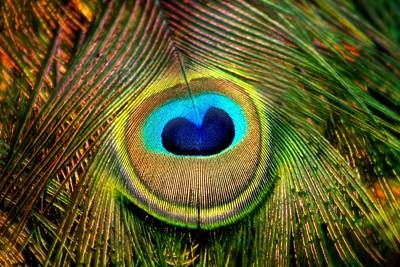 Eye Of The Peacock Feather Art Print