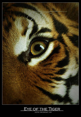 Eye Of The Tiger Art Print by Leito R