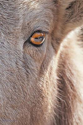 Photograph - Eye On Ewe by Edward Kovalsky