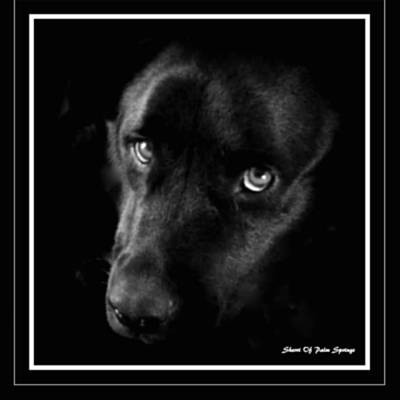 Eyes Of His Heart Art Print by Sherri's Of Palm Springs