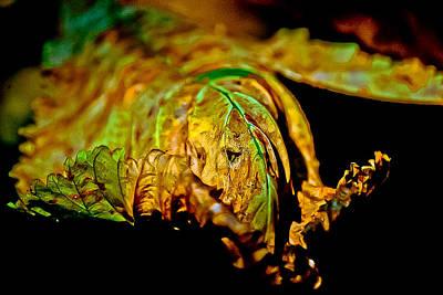 Face Leaf Art Print by Anita Megyesi