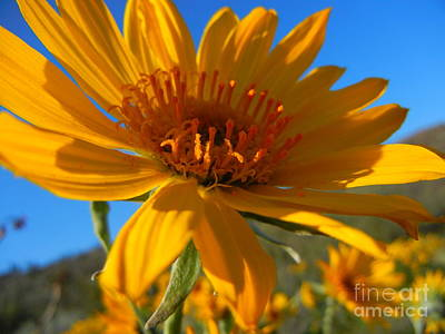 Photograph - Facing Into The Sun by KD Johnson