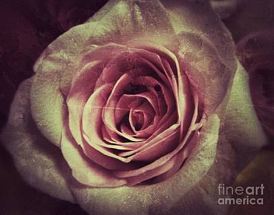 Faded Rose Art Print by Angela Wright