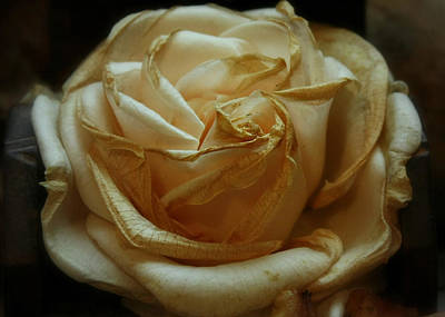 Photograph - Faded Rose by Julie Williams