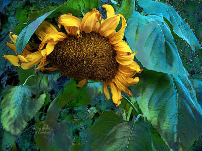 Sunflower Mixed Media - Fading Giant by Carol Cavalaris