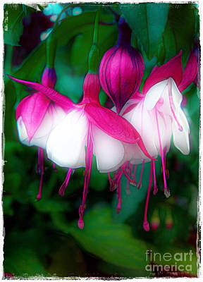 Photograph - Faerie Lanterns by Judi Bagwell