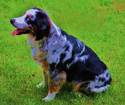 Herding Dog Photograph - Faithful by Helen Carson
